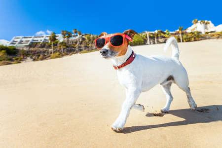 hond met een zonnebril die bij het strand op zomervakantie vakanties