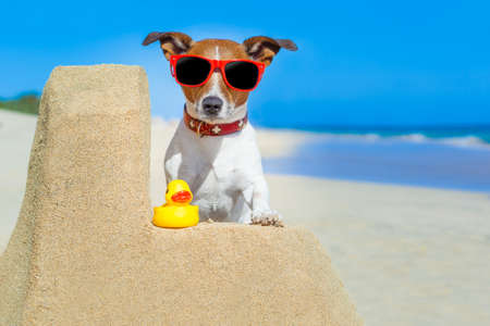 dog building a sandcastle with red sunglasses in summer vacation