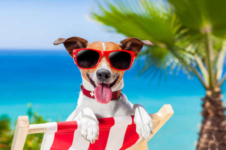 deck chair: dog relaxing on a fancy deck chair Stock Photo