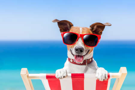 puppy dog: dog relaxing on a fancy deck chair Stock Photo