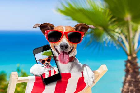 verano: perro tomar un selfie en vacaciones de verano Foto de archivo