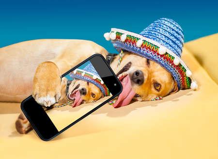 perro chihuahua: perro chihuahua borracho tomando un selfie con smartphone Foto de archivo