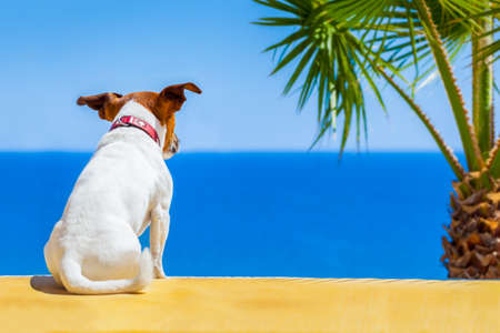dog watching the summer vacation view on the beach Stock Photo