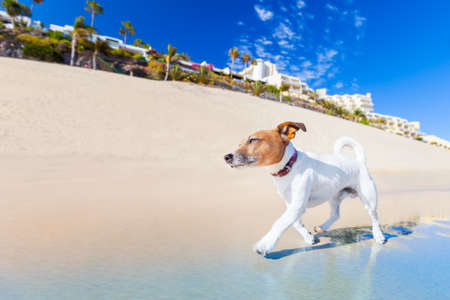 dog having fun running on the beach on summer vacation holidays photo