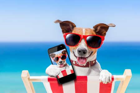 dog taking a selfie in summer holidays Standard-Bild
