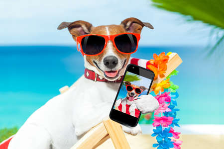 dogs: dog taking a selfie in summer holidays Stock Photo
