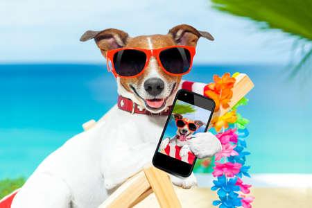 hot summer: perro tomar un selfie en vacaciones de verano Foto de archivo