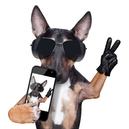 Bull Terrier taking a selfie with victory or peace fingers photo