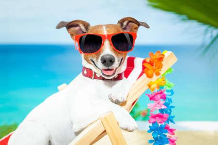 strandstoel: hond ontspannen op een mooie rode ligstoel