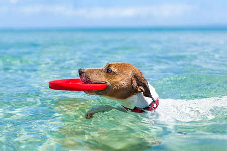 dog catching a red Flying disc and swimming in water