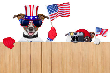 two dogs watching 4th of July parade photo