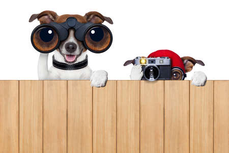 father and son dogs spying behind wood fence with camera and binoculars