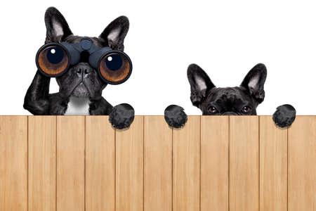 perros de padre e hijo espiando detrás de la cerca de madera