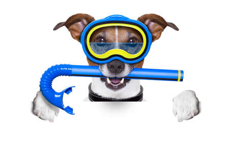 goggles: scuba dog with snorkel and goggles holding white blank banner or  placard Stock Photo