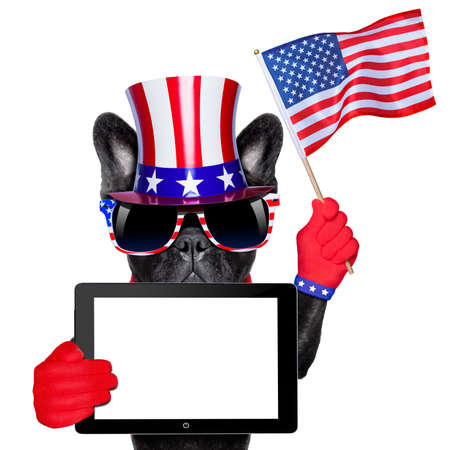 state election: american french bulldog holding a blank tablet pc and waving with usa flag