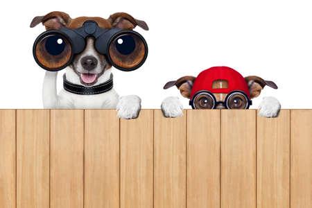 Verrekijker hond zoeken, kijken en observeren met zorg Stockfoto - 29292655