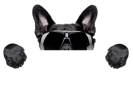 french bulldog: french bulldog hiding behind blank white placard