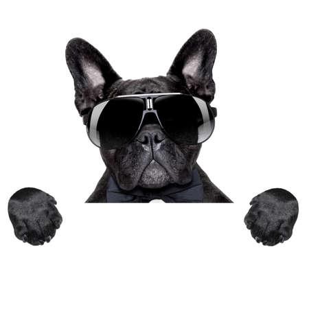 perro boxer: bulldog francés detrás de un cartel en blanco en blanco