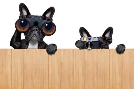 木製のフェンスの後ろにスパイ カメラや双眼鏡の父と息子の犬 写真素材