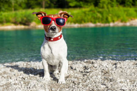 dog watching out at river shore in summer holidays photo