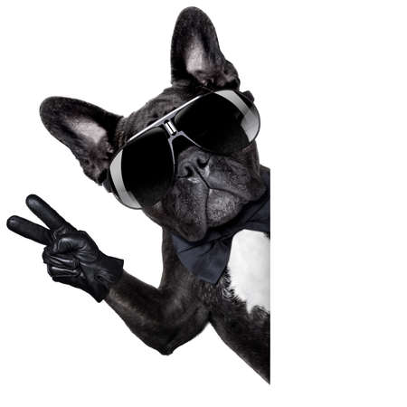 victory: cool dog with peace or victory fingers beside a white blank banner or placard