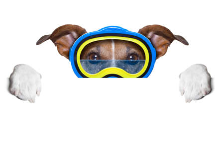 scuba dog with goggles hiding behind white blank banner or  placard photo