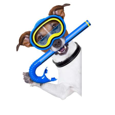 engranajes: perro de buceo con tubo y gafas al lado de la bandera en blanco blanco o pancarta