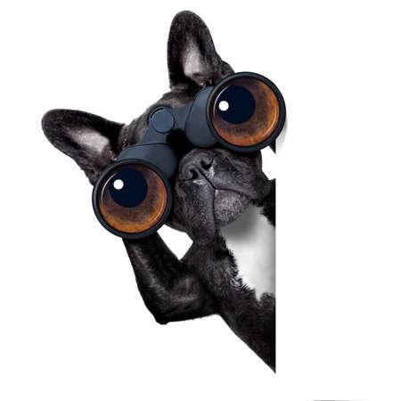 verrekijker hond zoeken, kijken en observeren met zorg naast een witte lege banner of overbrengen Stockfoto