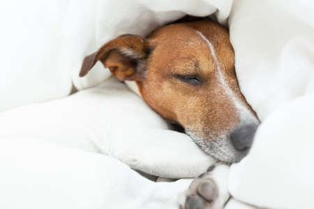 dog dreaming of better times  in life photo