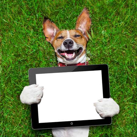 犬がくわえている緑の芝生の上に横たわる、空白のタブレット pc