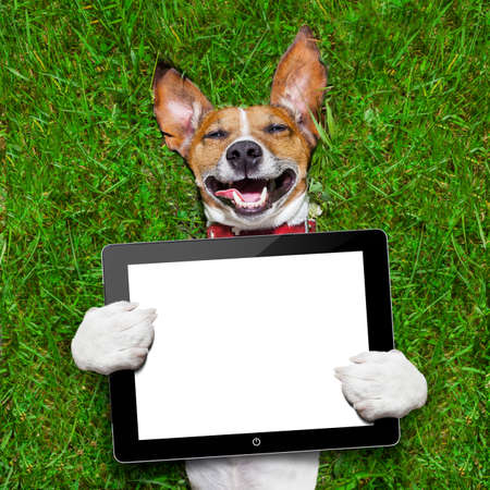 russell: dog holding a blank tablet pc lying on green grass