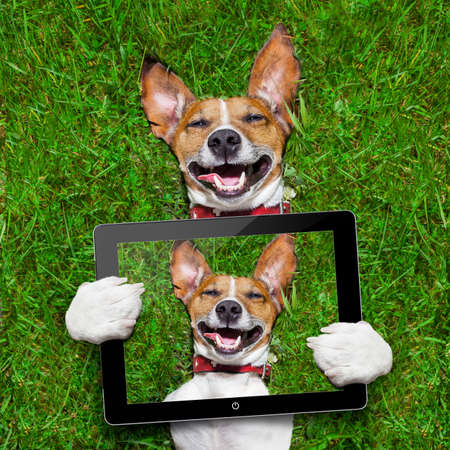people  camera: super funny face dog lying on back on green grass and laughing out loud taking a selfie with tablet pc Stock Photo