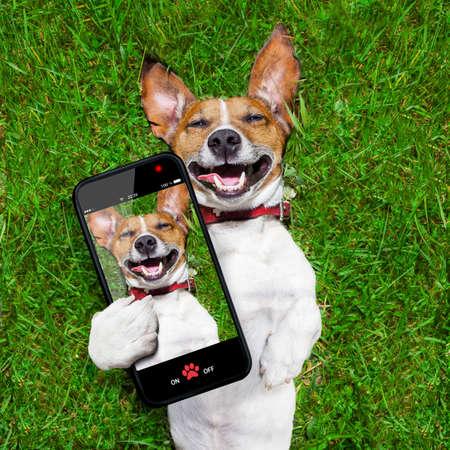 chien: Super dr�le chien de visage allong� sur le dos sur l'herbe verte et de rire en prenant un fort selfie