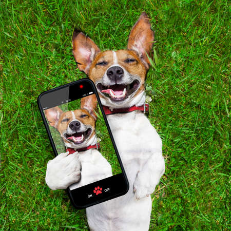 super funny face dog lying on back on green grass and laughing out loud taking a selfie photo