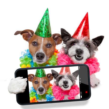animal cell: par de perros que tienen un selfie juntos