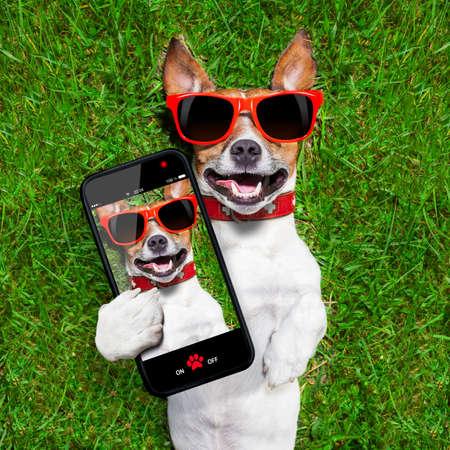 hond nemen van een selfie en lachen over die