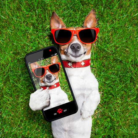 Chien tenant un selfie et souriant à la caméra Banque d'images - 29201032