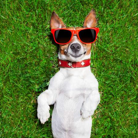スーパー面白い顔犬クレイジー探している緑の芝生の上の背中に横になっています。 写真素材