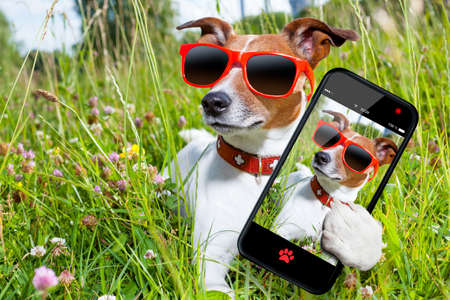 tourist vacation: cane in erba prendere una selfie cercando cos� cool