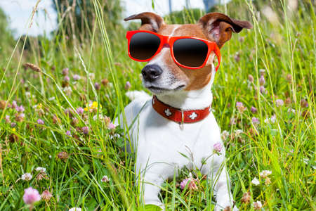 dog in green grass  looking so cool photo