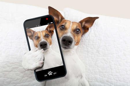 Dormiglione cane prendendo un selfie mentre nel letto Archivio Fotografico - 29201036