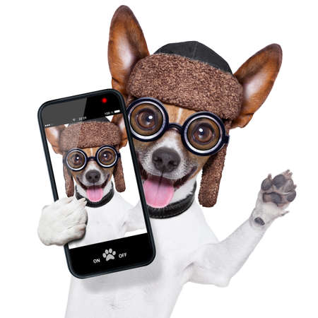 crazy silly dog with funny glasses showing tongue taking selfie photo