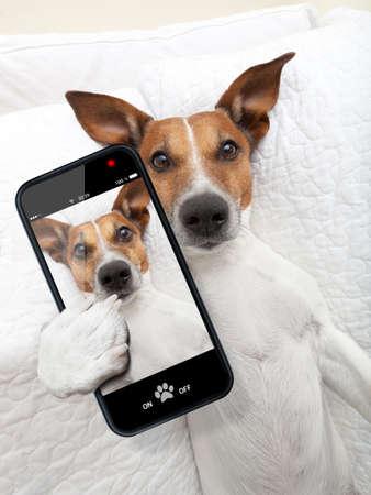 клетки: соня собака принимая selfie время как в постели