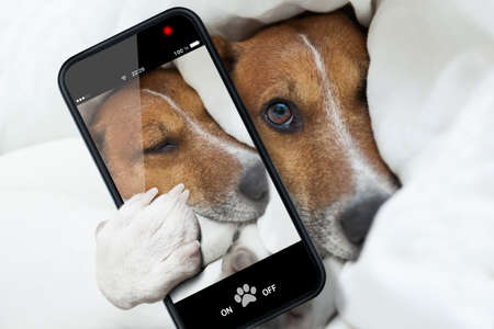 sleepyhead dog taking a selfie while sleeping photo