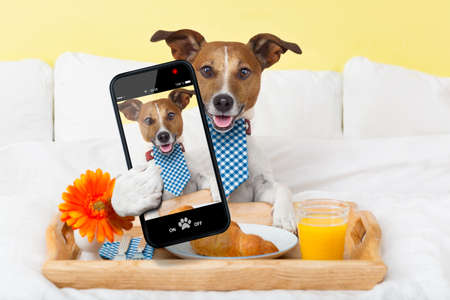 pet services: dog taking a selfie in bed  in the morning