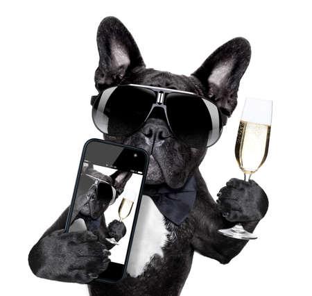 felicitaciones: selfie de perro tostado para usted en una pose guay Foto de archivo