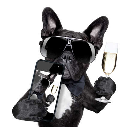 selfie of dog toasting for you in a cool pose photo