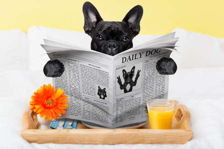 daily room: having breakfast in bed and reading the morning news