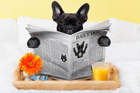 perro comiendo: tomando el desayuno en la cama y la lectura de las noticias de la mañana