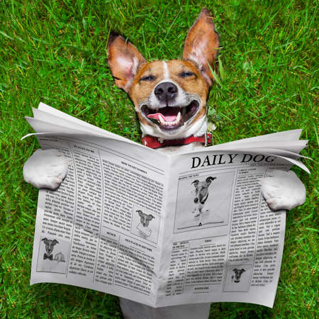 super funny face dog lying on back on green grass , reading gossip photo
